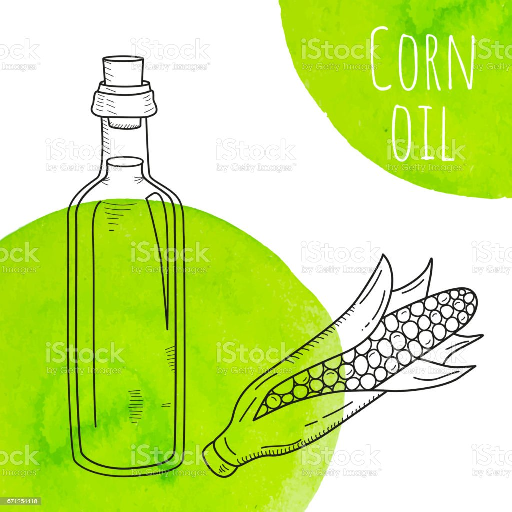 Hand drawn corn oil bottle with green watercolor spots vector art illustration