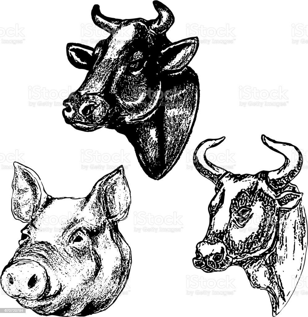 Hand Gezeichnet Kuh Und Schwein Köpfe Isoliert Auf Weißem ...