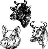 Hand drawn cow and pig heads isolated on white background. Design elements for menu, label, emblem, sign, brand mark, poster. Vector illustration
