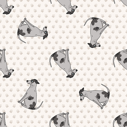 Hand drawn cute greyhouse race dog seamless vector pattern. Purebred pedigree fast puppy domestic pet on background. Dog lover agility dog pet all over print. Kennel Pooch.