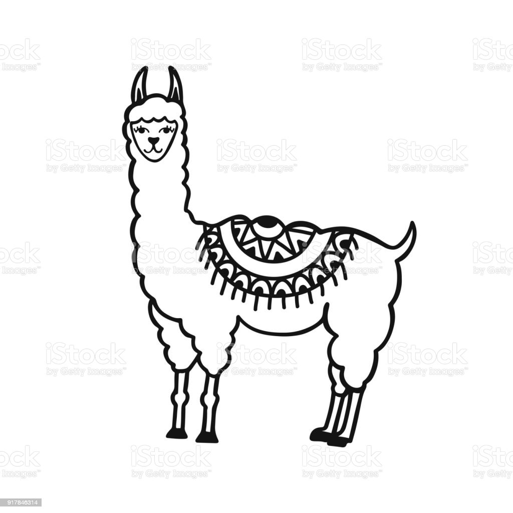 Line Drawing Llama : Lama peu mignon dessiné à la main illustration de vecteur