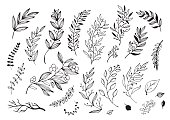 Hand drawn decorative christmas holly, misletoes, plant branches, twigs design element set.