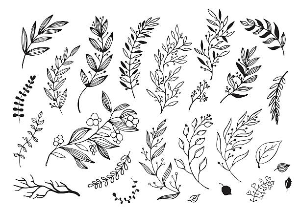 hand drawn decorative christmas holly, misletoes, plant branches - vintage nature stock illustrations, clip art, cartoons, & icons