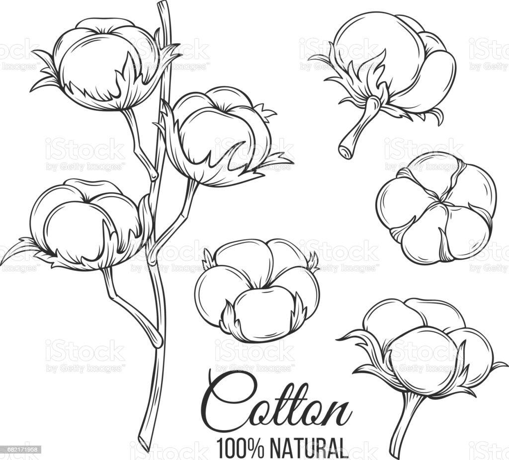 Hand drawn decorative cotton flowers vector art illustration