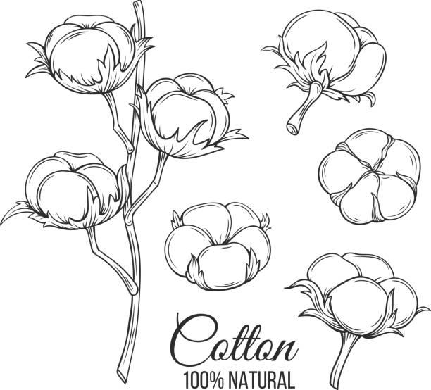 hand drawn decorative cotton flowers - cotton stock illustrations, clip art, cartoons, & icons