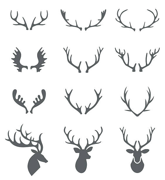 hand drawn deer antlers vectors. - deer antlers stock illustrations, clip art, cartoons, & icons