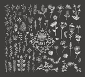 A vector set of florals, branches and other hand drawn design elements. EPS 10 file, layered & grouped.