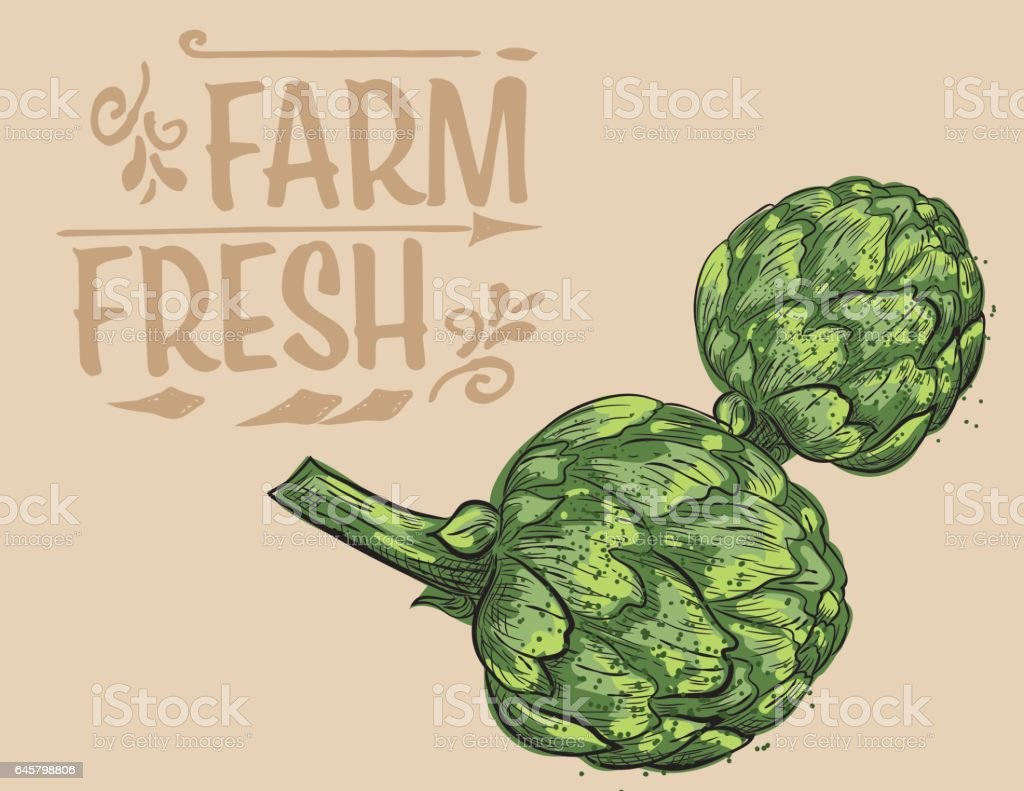 Hand Drawn Detailed Artichokes With Text - Illustration vectorielle