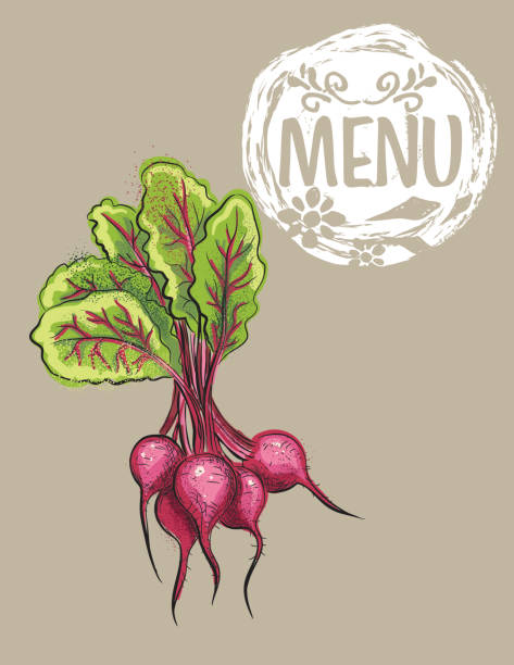 Hand Drawn Detailed Vegetables - Beets vector art illustration