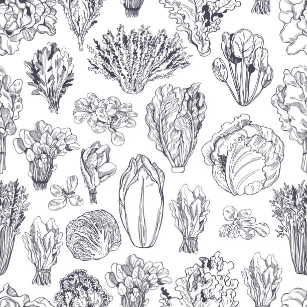 Hand drawn different kinds of lettuce. Vector  pattern Hand drawn different kinds of lettuce on white background. Vector  seamless pattern crucifers stock illustrations