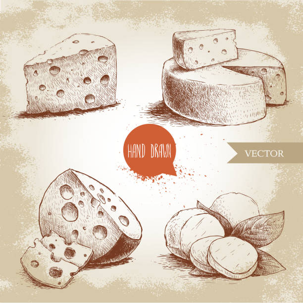 Hand drawn different type of cheese set Hand drawn different type of cheese set. Edam, mozzarella cheese with basil leafs, round cheese head, triangle of cheese. Vector organic food illustration. Vintage design. Sketch style. mozzarella stock illustrations