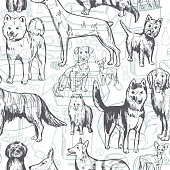 Hand drawn dogs. Vector pattern.