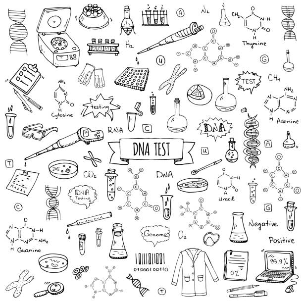 Hand drawn doodle DNA test icons set Hand drawn doodle DNA test icons set. Vector illustration. Medical lab symbol collection. Cartoon nano technology, medicine, genome elements: research tools, substance, molecules, nitrogenous bases dna test stock illustrations