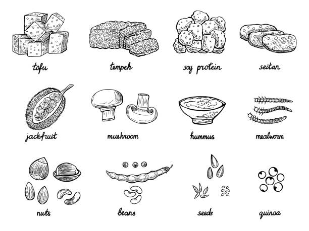 Hand drawn doodle meat alternative or analogue in vector Set of hand drawn meat alternative or analogue for vegans, vegetarians, healthy eating. Food icons of soy protein, beans, tempeh etc. Black and white doodle vector illustration temps stock illustrations