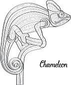 Hand drawn doodle outline chameleon illustration.
