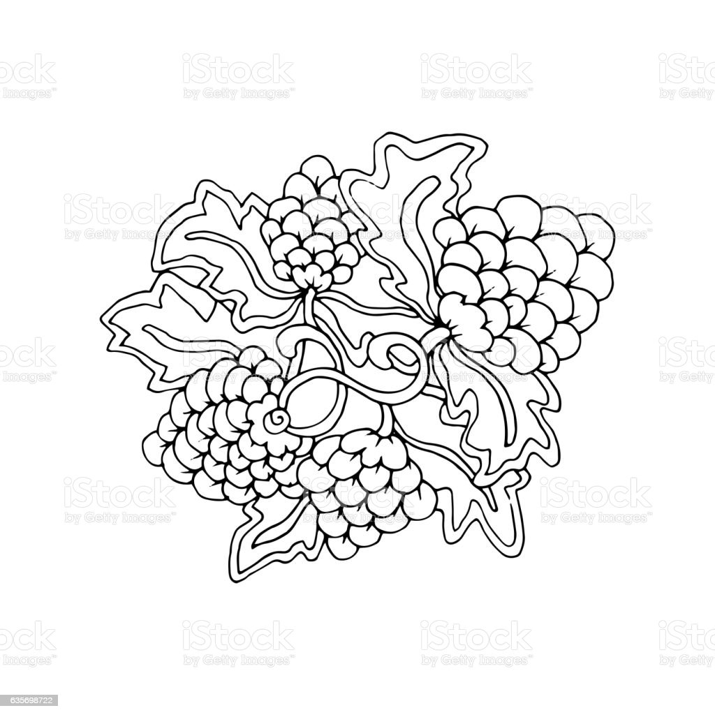 Hand drawn doodle outline grape fruit magic line art element royalty-free hand drawn doodle outline grape fruit magic line art element stock vector art & more images of abstract