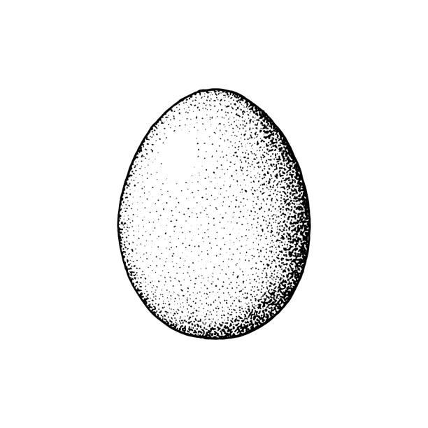 stockillustraties, clipart, cartoons en iconen met hand getrokken ei geïsoleerd op witte achtergrond. - dierenei