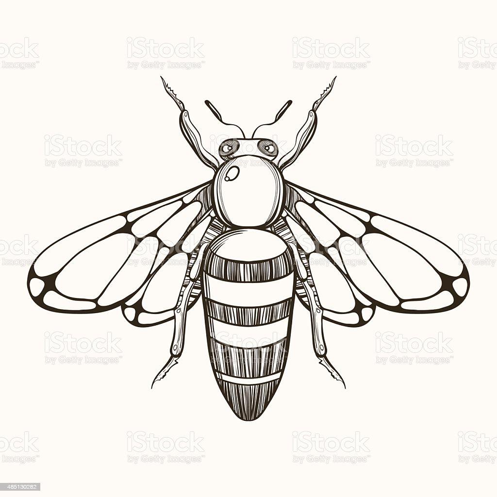 Hand gezeichnete Skizze des Biene Gravur. Vektor-illustration für tat – Vektorgrafik
