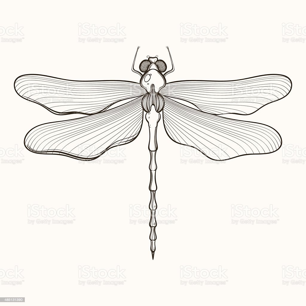 Hand Drawn Engraving Sketch Of Dragonfly Vector Illustration Fo ...