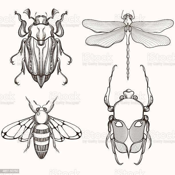 Hand drawn engraving sketch of scarab beetle may bug vector id485130250?b=1&k=6&m=485130250&s=612x612&h=og285xzvchp85snjfp2fa4iepynpnpllvgvr1zjyc4s=