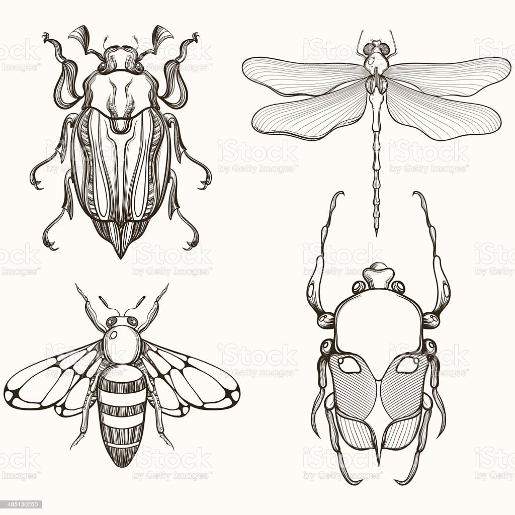 Hand drawn engraving Sketch of Scarab Beetle, May bug, vector art illustration