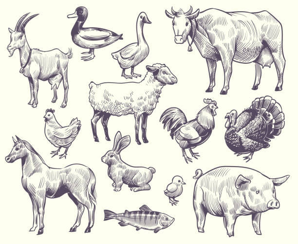 Hand drawn farm animals and birds. Goat, duck and horse, sheep and cow, pig and rooster, rabbit and turkey, chicken and fish, goose vector set Hand drawn farm animals and birds. Goat, duck and horse, sheep and cow, pig and rooster, rabbit and turkey, chicken and fish, goose isolated sketches vector set farm animals stock illustrations