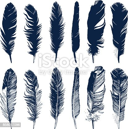 Hand drawn feathers and their silhouettes set on white background