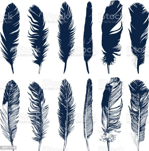 Hand drawn feathers set on white background vector id858012096?b=1&k=6&m=858012096&s=612x612&h=zepg5y6vjagds0paoogta7adrrdr3aykoctwetxasue=