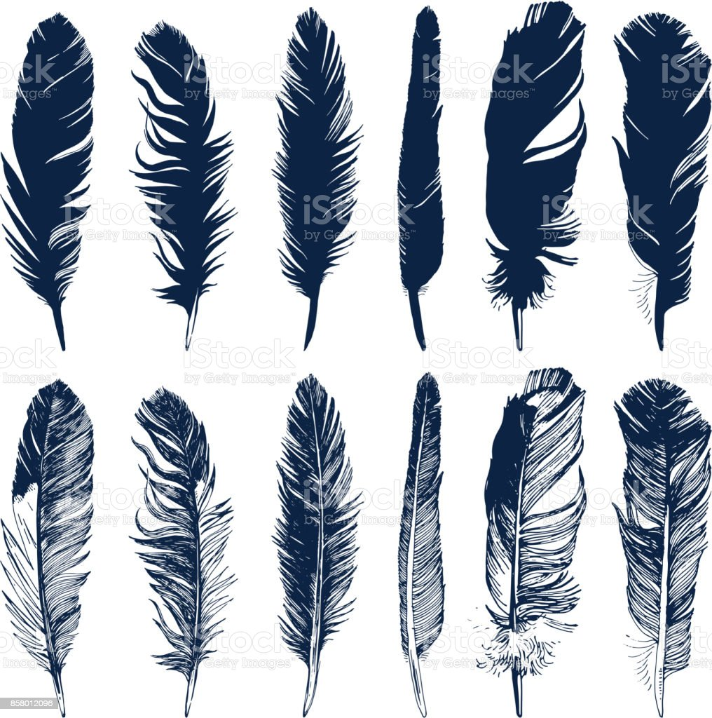 Hand drawn feathers set on white background vector art illustration
