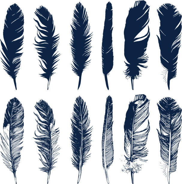illustrazioni stock, clip art, cartoni animati e icone di tendenza di hand drawn feathers set on white background - piume colorate