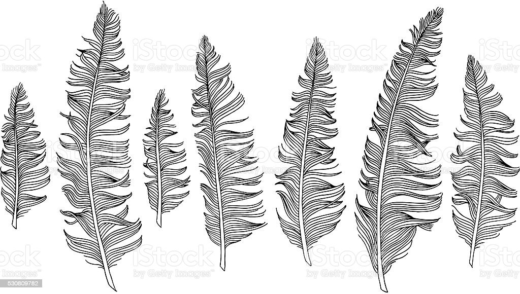 Hand drawn feathers vector art illustration