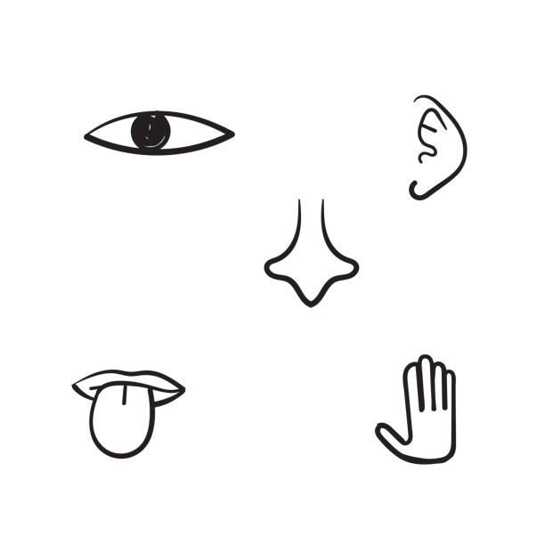 hand gezeichnet fünf menschlichen sinn illustration mit doodle linie kunststil - sensorischer impuls stock-grafiken, -clipart, -cartoons und -symbole