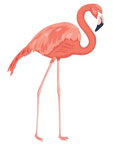 Hand Drawn Flamingo Isolated On White
