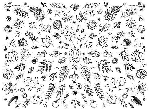 Hand drawn floral elements for autumn