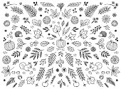 Hand drawn floral elements for autumn / fall - seasonal leaves, flowers and plants for text decoration