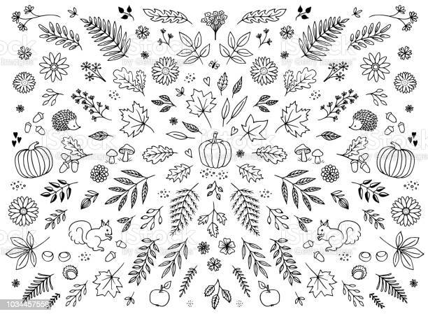 Hand drawn floral elements for autumn vector id1034457558?b=1&k=6&m=1034457558&s=612x612&h=idoswhfcfx5kgz2omgfuadw8swqqfdcckg0syecn2b8=