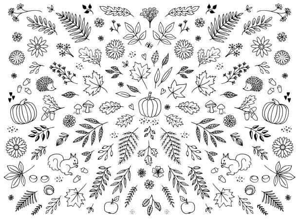 Hand drawn floral elements for autumn Hand drawn floral elements for autumn / fall - seasonal leaves, flowers and plants for text decoration pumpkin stock illustrations