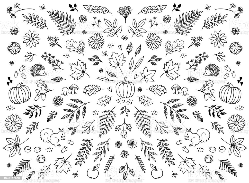 Hand drawn floral elements for autumn vector art illustration