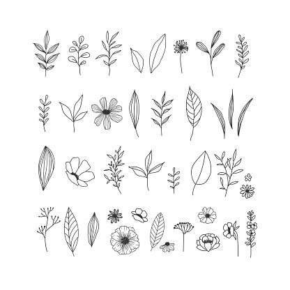 Hand drawn floral illustrations collection on white background