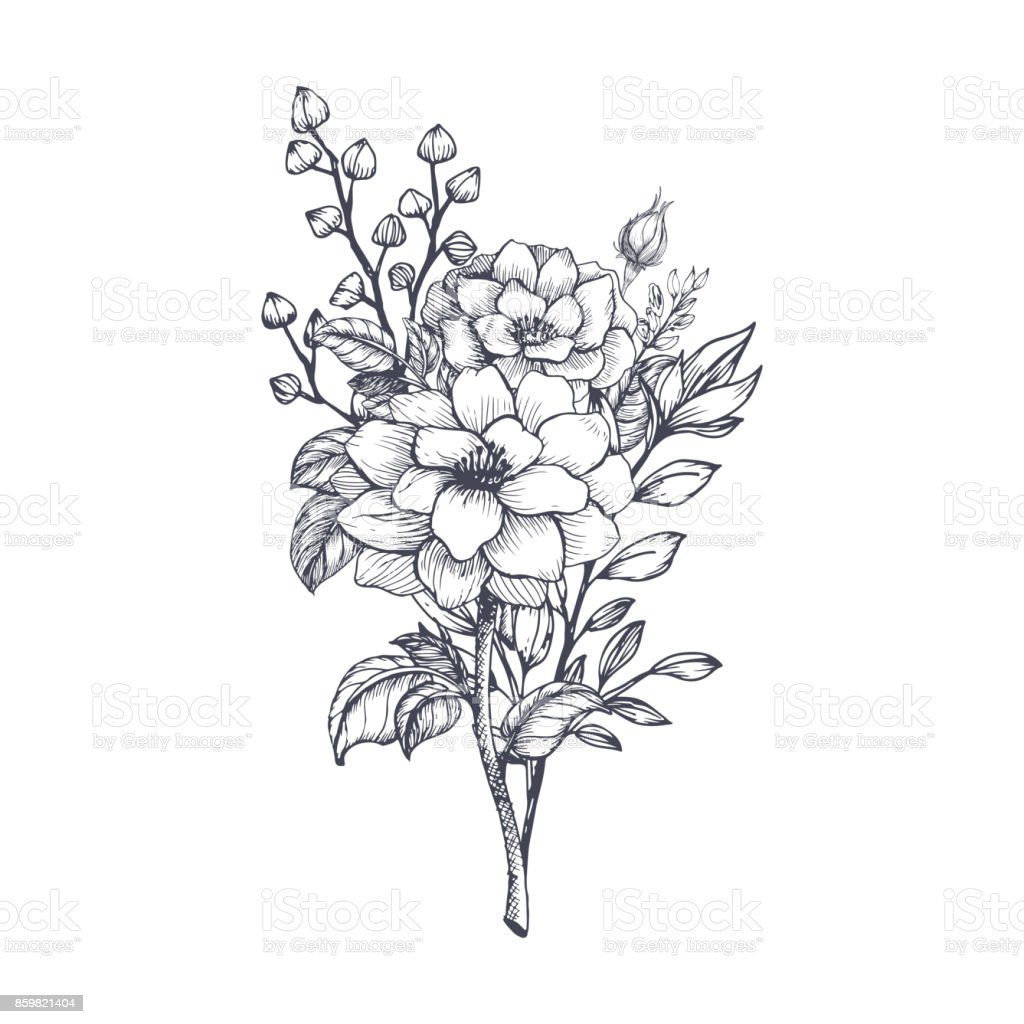 Hand Drawn Flower Bouquet Stock Illustration Download Image Now Istock