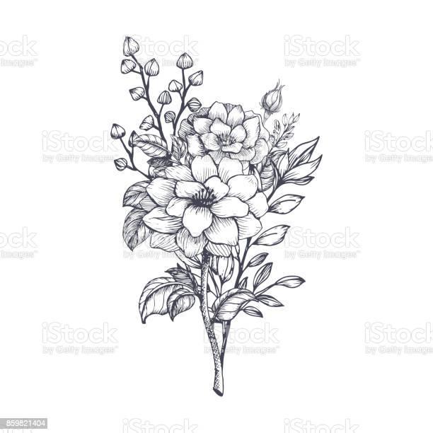 Hand drawn flower bouquet vector id859821404?b=1&k=6&m=859821404&s=612x612&h=ipnqi6yp4e1unjo2djny8bcggihkc8ohjj cvur9g3m=