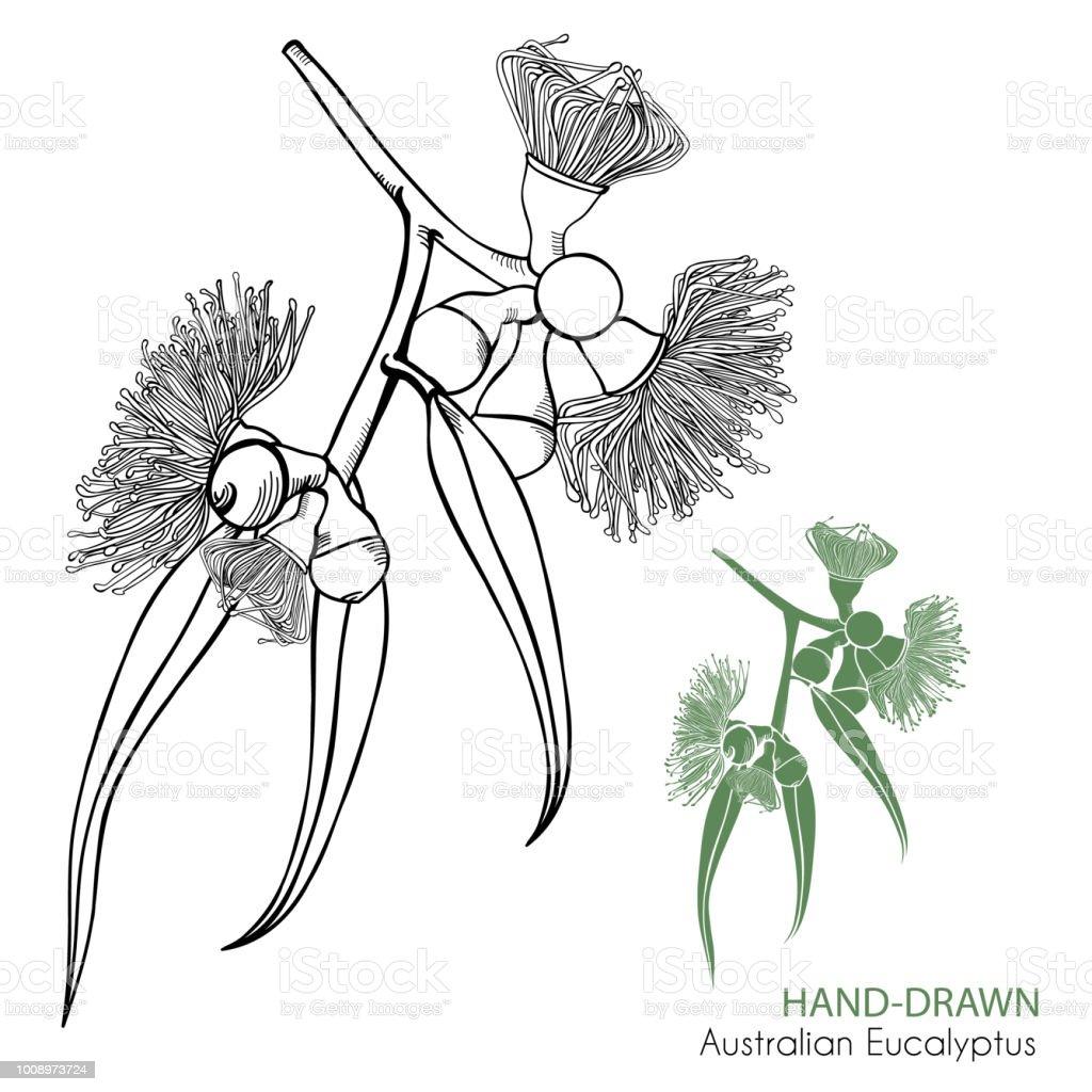 Hand drawn flowering gum tree vector illustration vector art illustration
