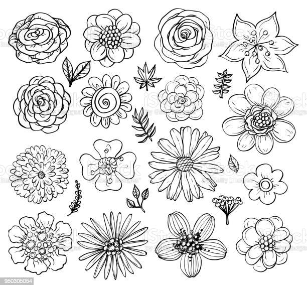 Hand drawn flowers and plants vector illustrations in sketch style vector id950305054?b=1&k=6&m=950305054&s=612x612&h=oyh24um5gkwz9pp cwn63 d9ufquek5o5fbxawpqez8=