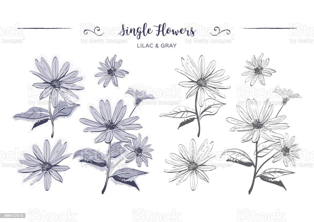Ilustración de Flores Dibujado A Mano Sketch Chamomiles Margaritas ...