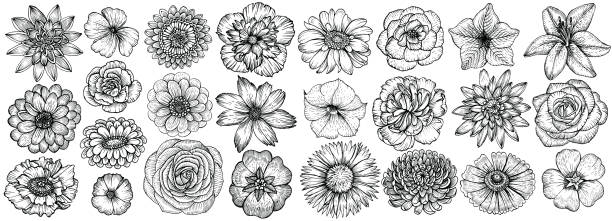 Hand drawn flowers, vector illustration. Floral vintage sketch. Hand drawn flowers, vector illustration. Big set of different types garden flowers in sketch style. flowers tattoos stock illustrations