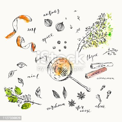 Hand drawn food and drink illustration. Ink and watercolor sketch of spices and herbs for cooking and tea. Honey, orange zest, nutmeg, cinnamon, mint, star anise, cardamom, peppercorn, clove, thyme.