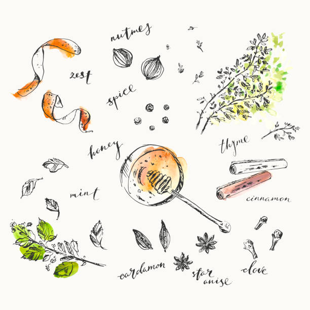 Hand drawn food and drink illustration. Ink and watercolor sketch of spices and herbs Hand drawn food and drink illustration. Ink and watercolor sketch of spices and herbs for cooking and tea. Honey, orange zest, nutmeg, cinnamon, mint, star anise, cardamom, peppercorn, clove, thyme. thyme stock illustrations