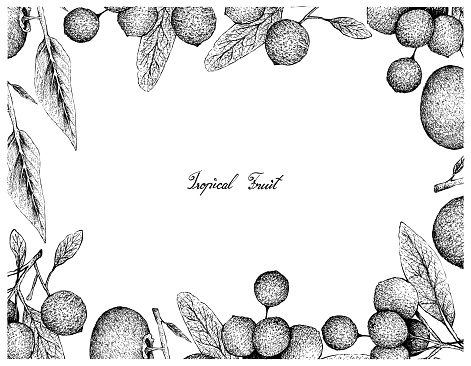 Hand Drawn Frame of Gold Apple and Hanza Fruits