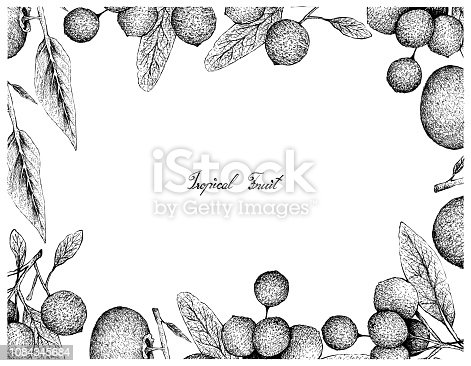istock Hand Drawn Frame of Gold Apple and Hanza Fruits 1084345684