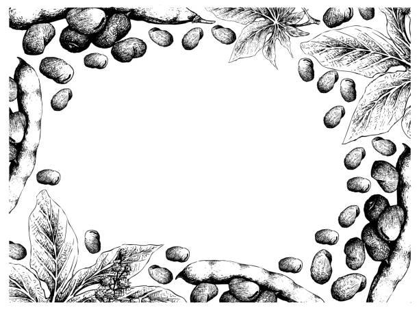 hand gezeichnet freame von fava beans und castor beans - wunderbaum stock-grafiken, -clipart, -cartoons und -symbole